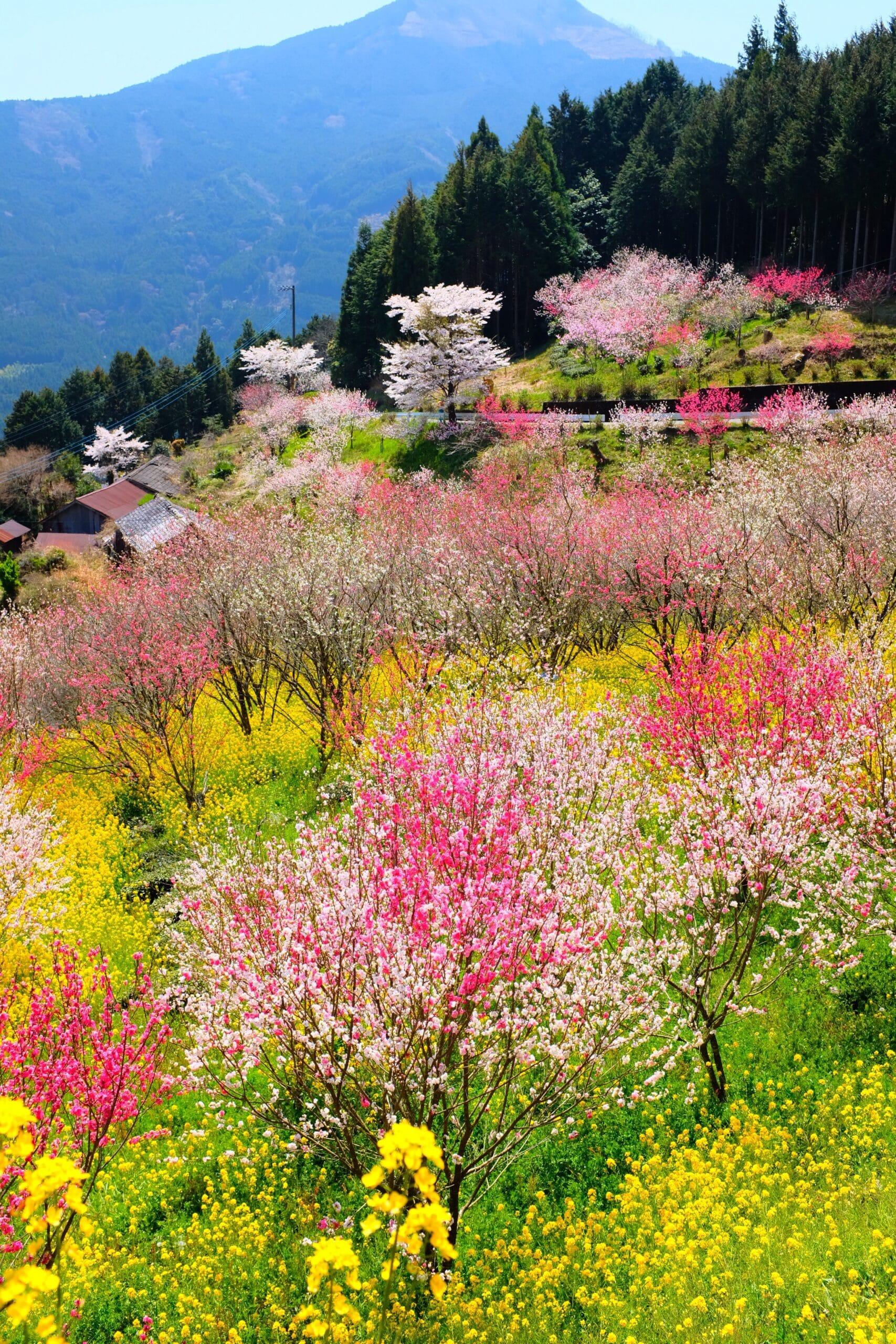 Menu de printemps – Semaine 21 – Mai